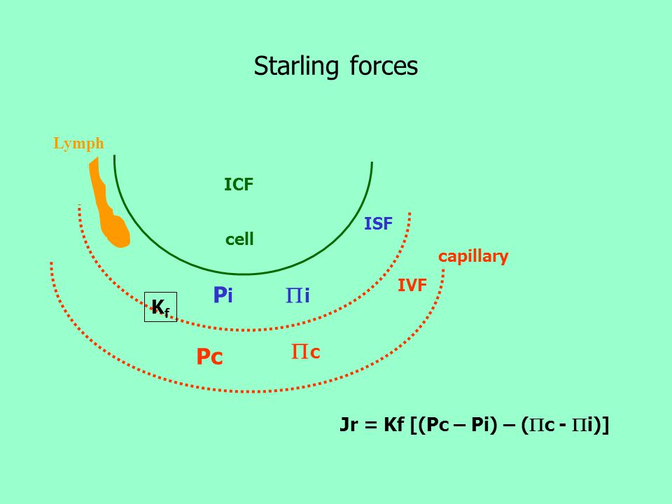 Starling forces Pi i c Pc Kf Jr = Kf [(Pc – Pi) – (c - i)] Lymph